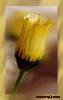Flower-II