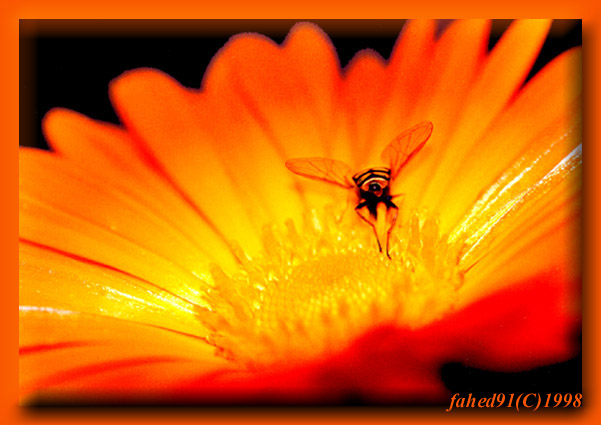hoverfly-II